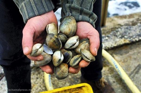 وزارة الصيد البحري تمنع جمع وتسويق الصدفيات بمنطقة تطوان – شفشاون