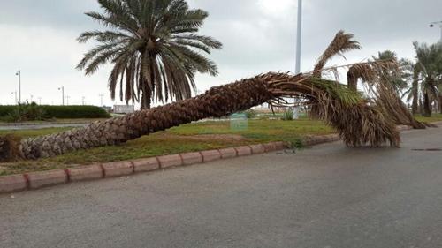 عواصف ورياح قوية تقتلع الأشجار وتسقط أعمدة وكبلات كهربائية بطنجة