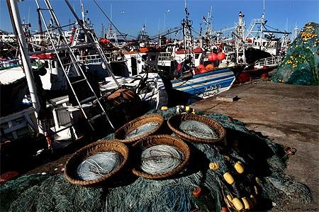 ارتفاع الكميات المفرغة من الصيد الساحلي بالموانئ المتوسطية بنسبة 40 في المائة
