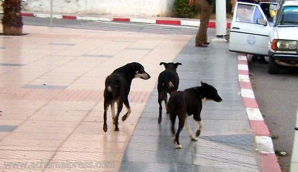 الجماعة الحضرية بتطوان تطلق حملة لمحاربة الحيوانات الضالة المتواجدة بالمدينة