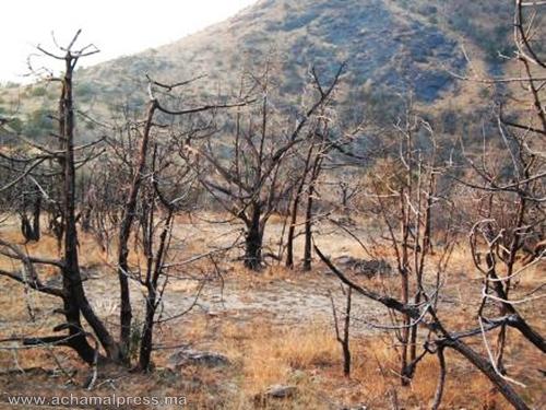 بارونات المخدرات بالمنطقة الشمالية يهددون سكان القرى بكارثة بيئية محدقة