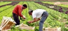 مساحة الأراضي الزراعية ستنخفض بنسبة 25% عام 2050