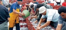موانئ الواجهة المتوسطية تسجل تراجعا في منتجات الصيد الساحلي والتقليدي