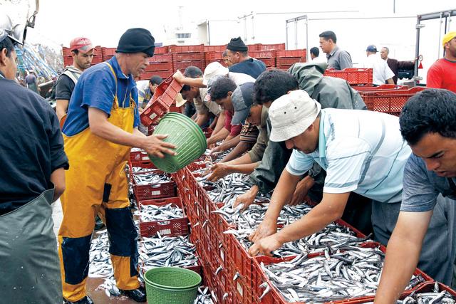 موانئ الواجهة المتوسطية تسجل ارتفاعا في قيمة منتجات الصيد الساحلي والتقليدي