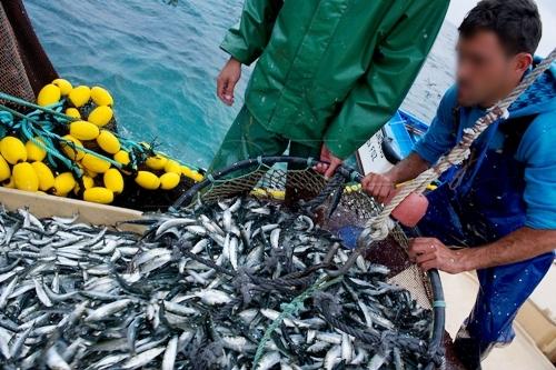 المغرب يحتل المرتبة الأولى إفريقيا في إنتاج الأسماك