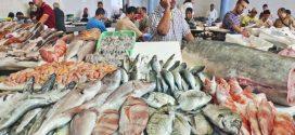 جامعة غرف الصيد البحري تعزو الزيادة في أسعار السمك إلى المضاربة