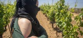 تحقيق صحفي يؤكد استغلال العاملات المغربيات جنسيا في الحقول الاسبانية