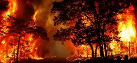 إسبانيا .. إتلاف أزيد من 1000 هكتار وإجلاء 2500 شخص جراء حريق بإقليم فلانسيا