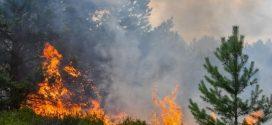 اندلاع حريق بغابة ضواحي طنجة يلتهم مساحات كبيرة من الغطاء النباتي