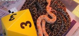 تفكيك شبكة دولية تنشط في تهريب الحيوانات النادرة من إسبانيا إلى المغرب