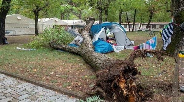 سقوط شجرة يتسسب في وفاة شقيقتين مغربيتين | الشمال بريس