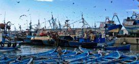 لقاء بطنجة يبحث تراجع مردودية قطاع الصيد البحري على مستوى السواحل الشمالية