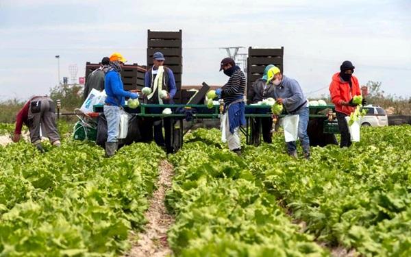 تقرير حقوقي يرصد معاناة المهاجرين والعمال الزراعيين المغاربة بإسبانيا