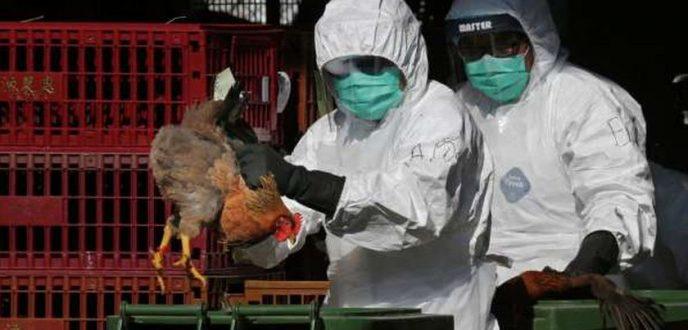 """روسيا تعلن رصد أول إصابة بشرية بانفلونزا الطيور """"إتش5 إن8"""""""