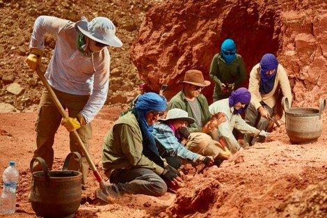 علماء يكتشفون أقدم نجم بحر أحفوري يعود إلى 480 مليون سنة في المغرب