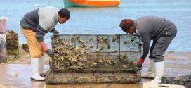 وضع 3 نقاط لمراقبة جودة المياه بسواحل شفشاون لتنمية تربية المحار